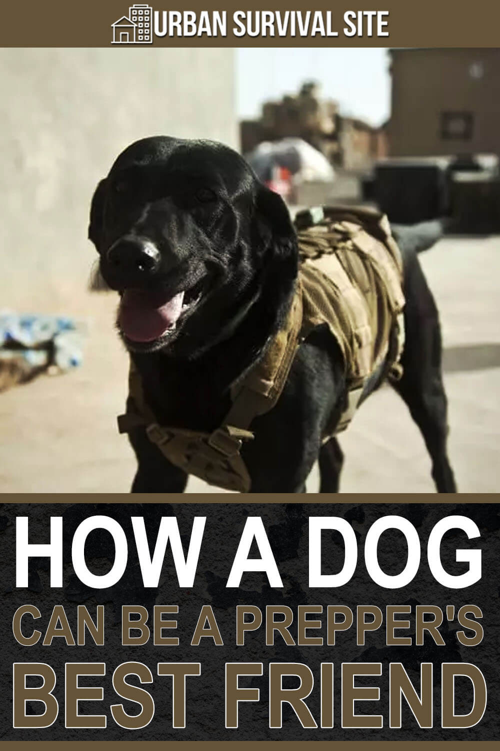 How a Dog Can Be a Prepper's Best Friend