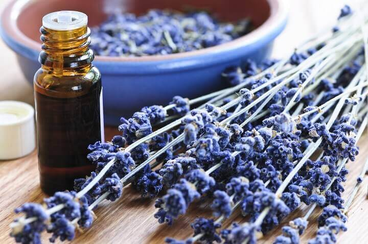 Lavender Herbs and Oil