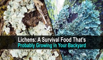 Lichens: A Survival Food That's Probably Growing in Your Backyard