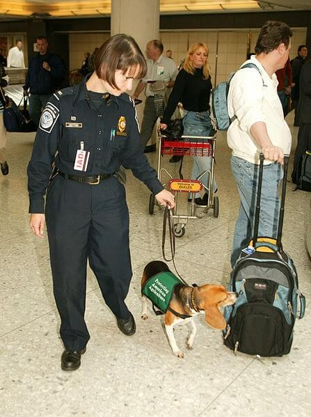 Little Airport Dog