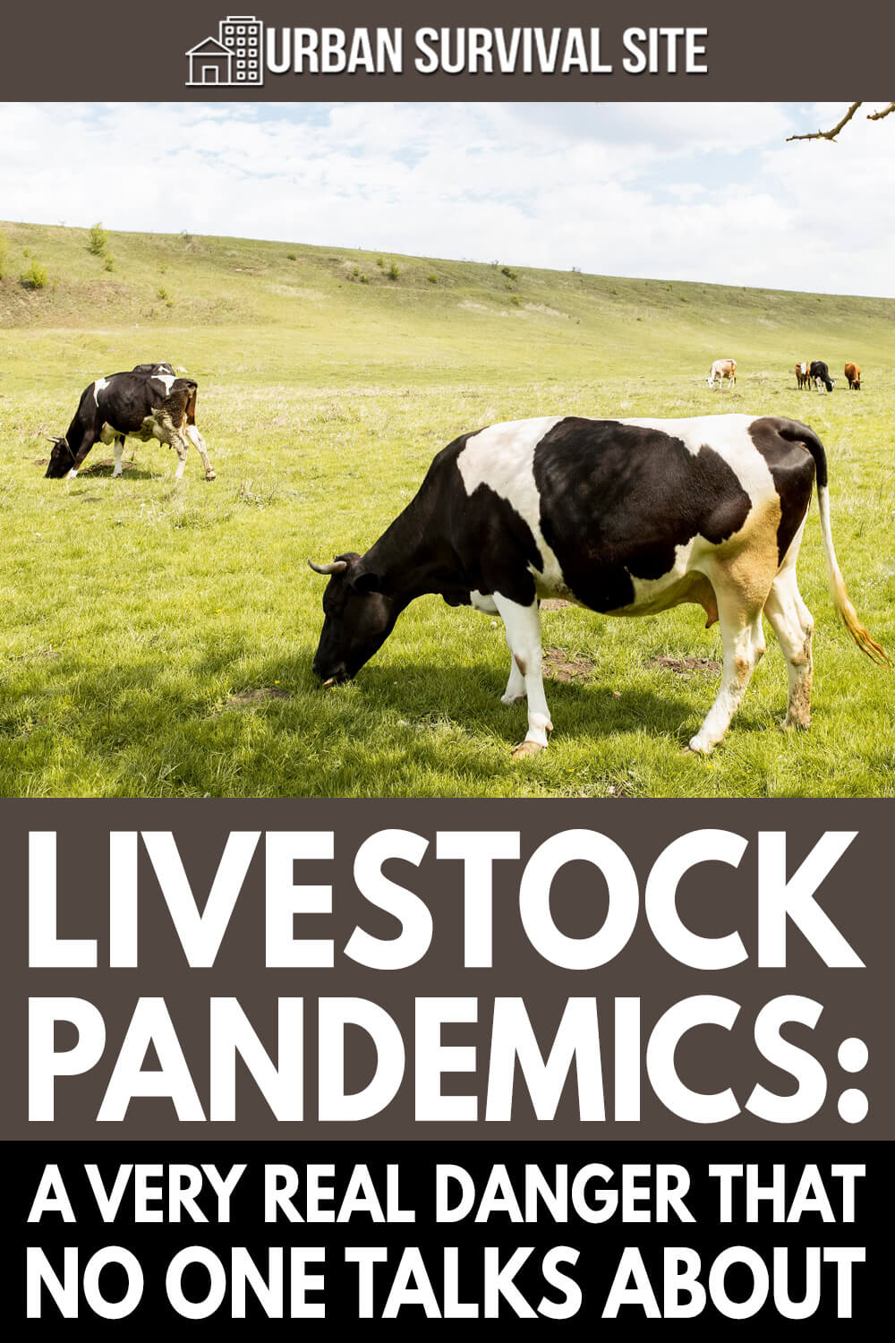 Livestock Pandemics: A Very Real Danger That No One Talks About