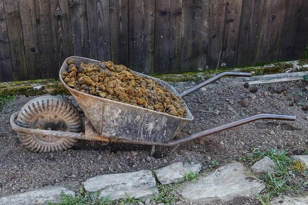 Manure in Wheelbarrow