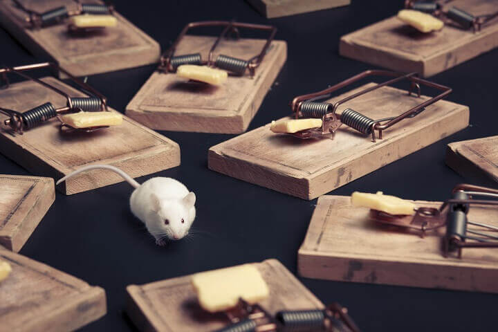 Mouse Surrounded by Rat Traps