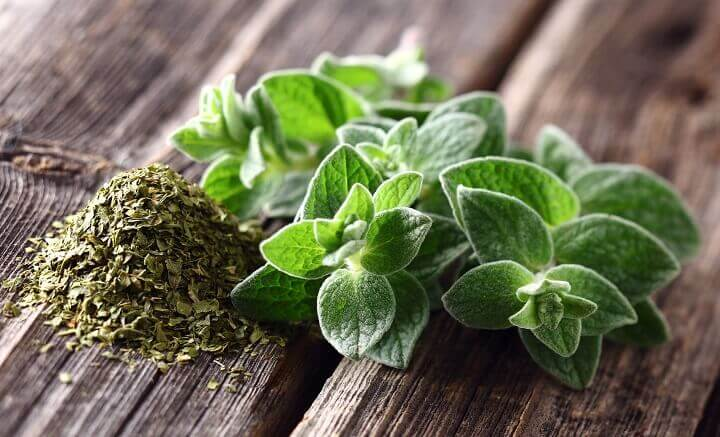 Oregano Spices and Leaves