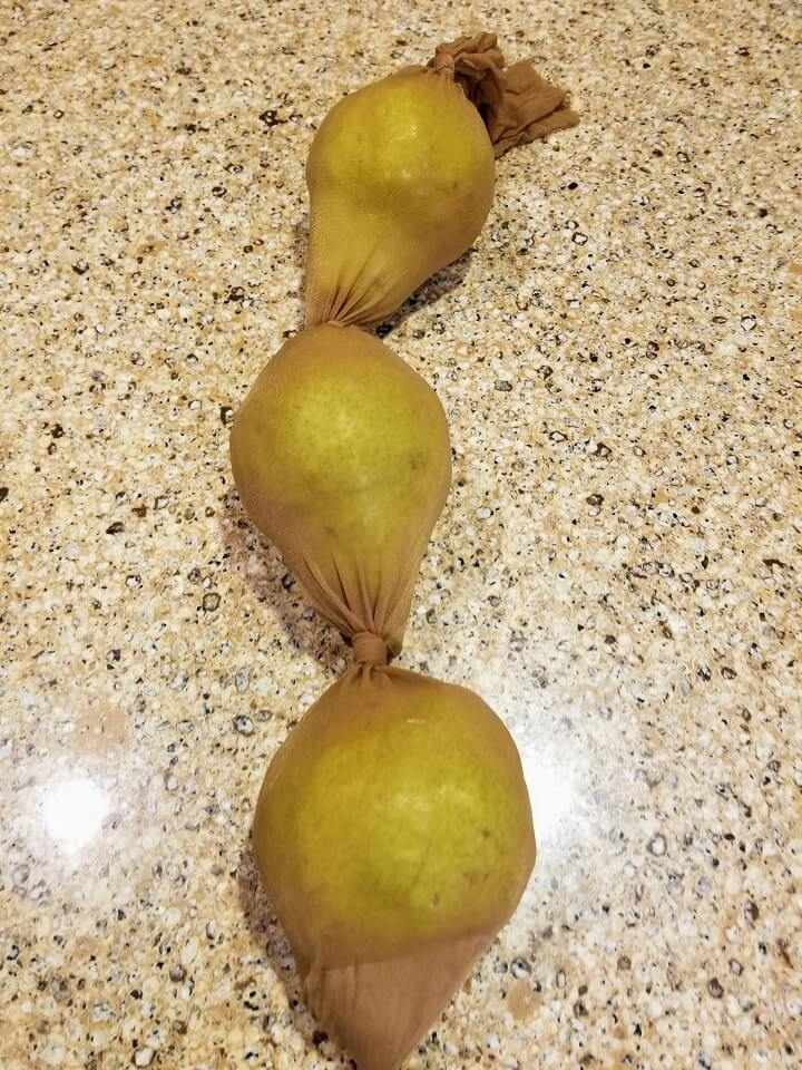 Pears Stored In Pantyhose
