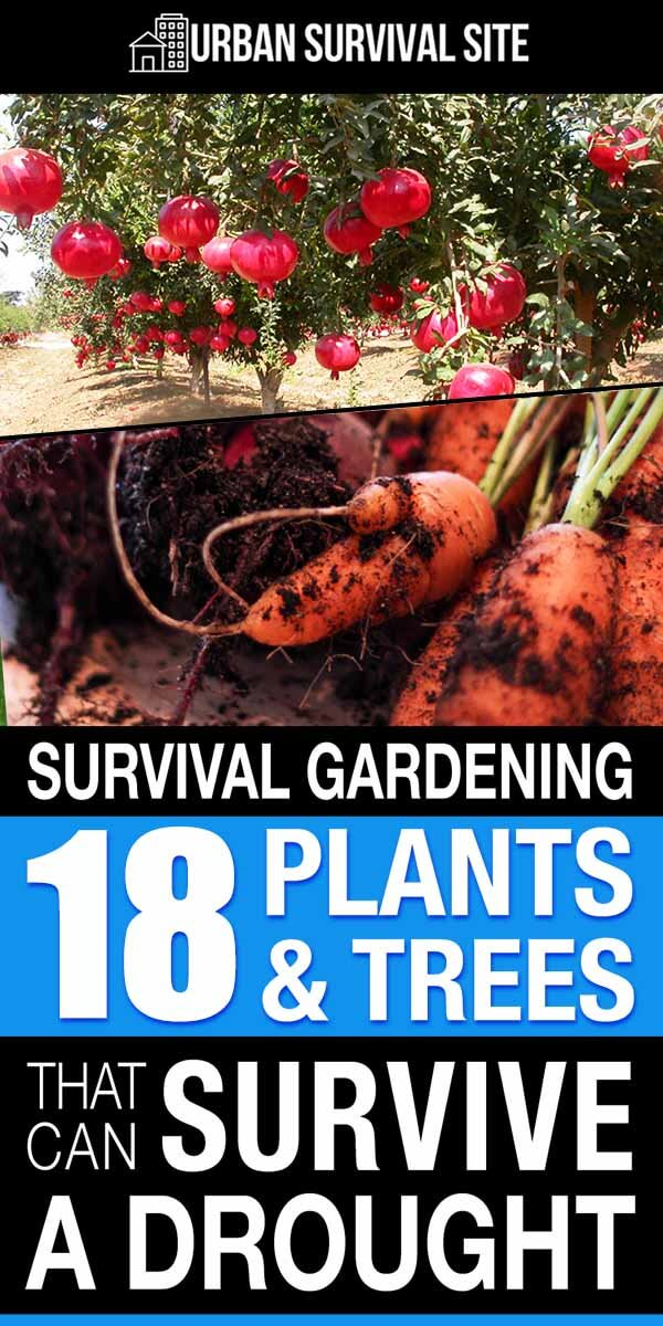 Survival Gardening: 18 Plants & Trees That Can Survive a Drought