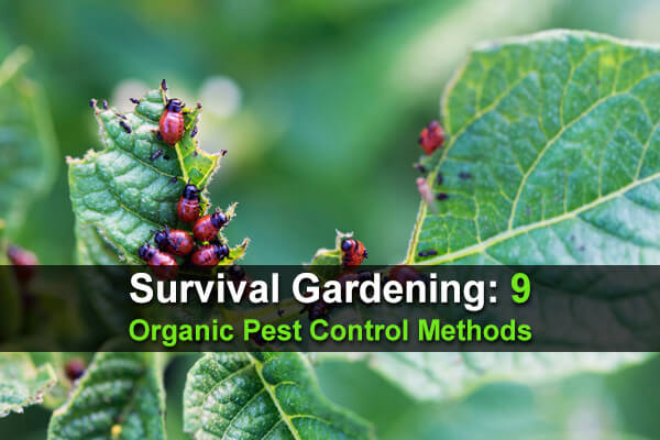 Survival Gardening: 9 Organic Pest Control Methods