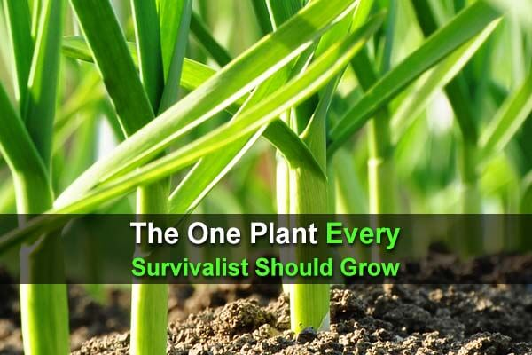 The One Plant Every Survivalist Should Grow