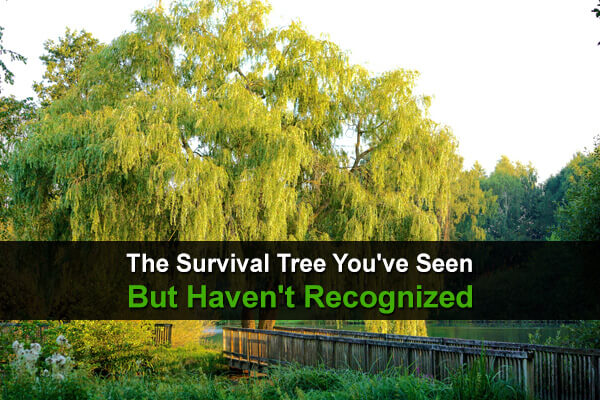 The Survival Tree You've Seen But Haven't Recognized