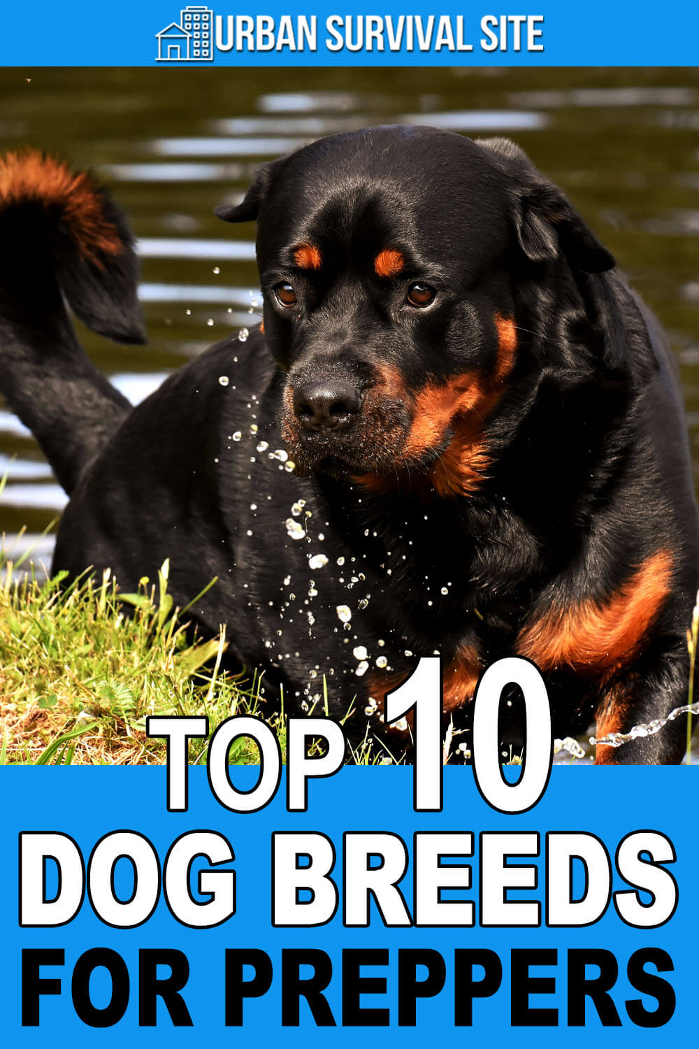 Top 10 Dog Breeds For Preppers