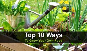 Top 10 Ways to Grow Your Own Food