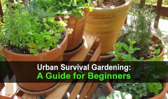 Urban Survival Gardening: A Guide for Beginners